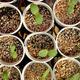 Plant Your Own Succulent