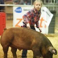 2019 Swine Show