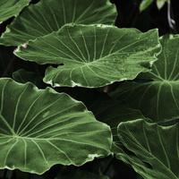 Plant Talk Series