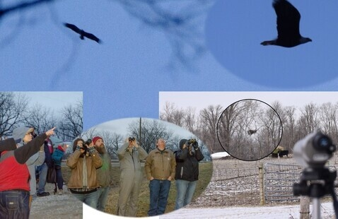 Collage of pictures from the Morning Roost Site & one of the eagle nests you can visit.