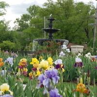 K-State Gardens Iris Sale