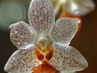 Lunch and Learn with Clemson Extension: Orchid Care