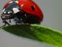 Lunch and Learn with Clemson Extension: Attracting Beneficial Insects to Your Garden