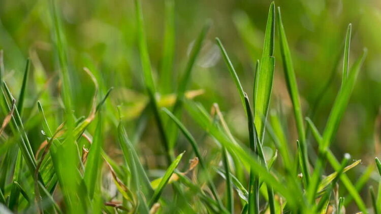 Lunch and Learn with Clemson Extension: Warm Season Lawn Care Basics