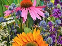 Lunch and Learn with Clemson Extension: Home Grown Bouquet