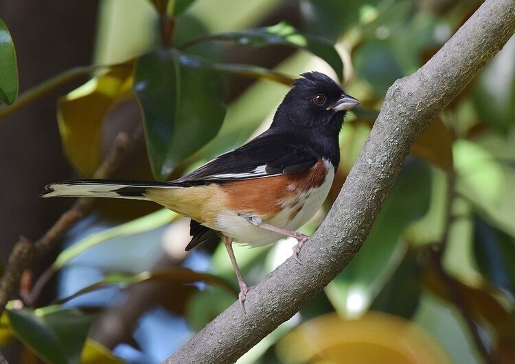 Lunch and Learn with Clemson Extension: Beginner Birding