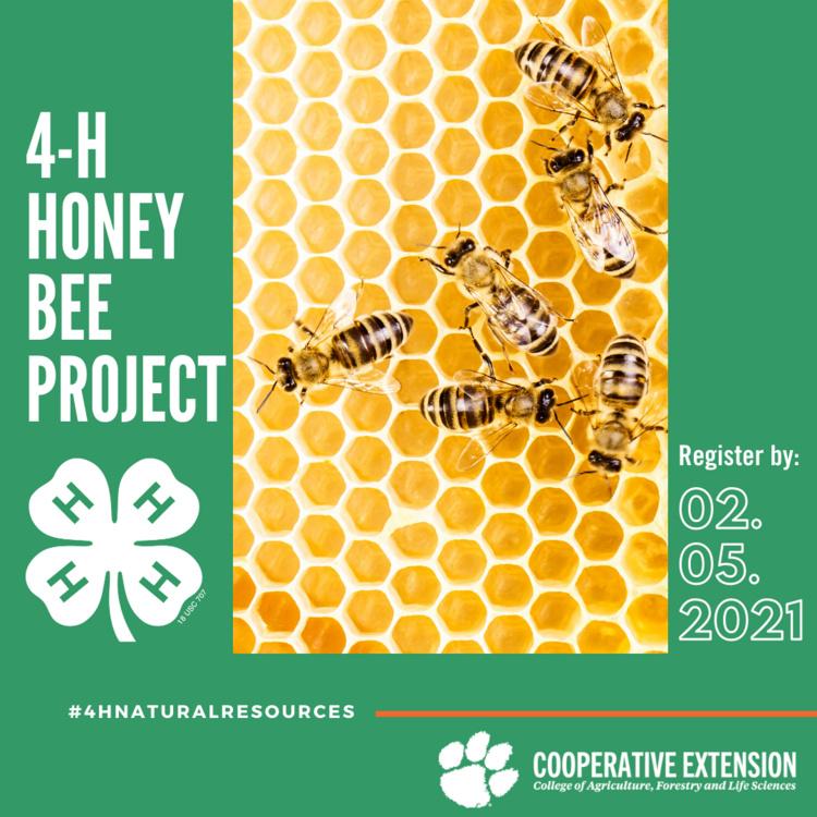 4-H Honey Bee Graphic