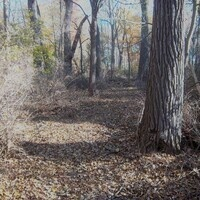 Flat Naturalist Self-Guided Walks