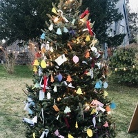 Come Visit the Wishing Tree!