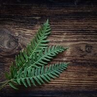 three green fronds on a wood background