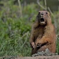 Virtual Groundhogs