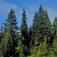 Virtual Importance of Hemlock Forests