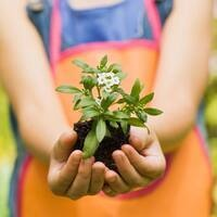 Junior Master Gardeners: Winter Seed Starters ages 8-10 - Virtual (Southampton)