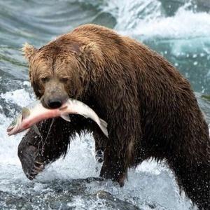 Event: Wild Alaska: Exhibit by Cory Lescher