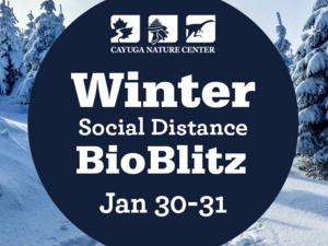 Winter Social Distance BioBlitz