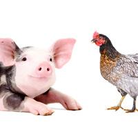 Farmed Animals: Activism, Legislation, and Litigation - 3 CLE Credits