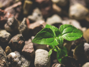 photo of green plant shoot among rocks
