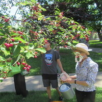 Serviceberry Foraging Workshop