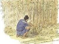 Print of ancient Chinese bamboo harvest for paper-making. A man in a tunic and barefoot squats down as he cuts bamboo amidst a field of bamboo stalks.