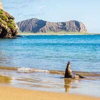 Alumni Virtual Travel Presents: Galapagos
