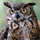 Virtual Lunchtime Lecture: Owls