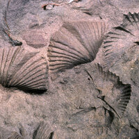 Virtual Lunchtime Lecture: Fossils