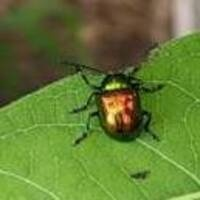 "UD Botanic Gardens Presents ""Uh-Oh...What's That!? A Pest & Disease Survival Guide"""