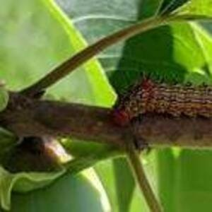 """UD Botanic Gardens Presents """"Uh-Oh...What's That!? A Pest & Disease Survival Guide"""""""