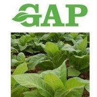 GAP Training & Tobacco Update