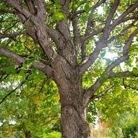 Tree-mendous Trees!