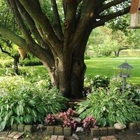 Tips for Shade Garden Plants