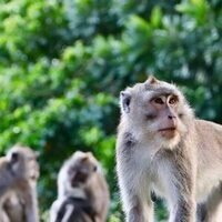 Epidemics, Societies, and Math: How Disease Changes Animal Evolution