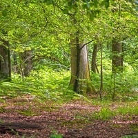 Learn at Home - Rhode Island Forest Owners and Enthusiasts: Managing Our Forests to Combat and Adapt to Climate Change