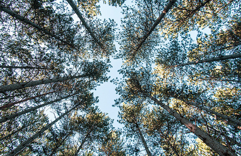 image of forest looking up