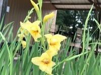 Public Spring Plant Sale (Online)