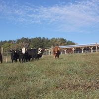 Beef Heifer Development School Field Day