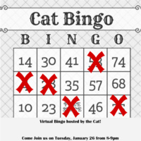 Virtual Bingo with the Cat