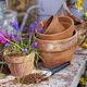 Ask a Master Gardener: Container Gardening