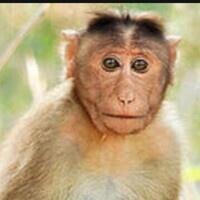 Zooniverse - Monkey Health Explorers