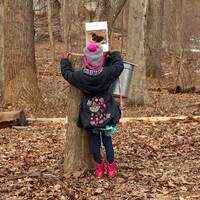 Maple Sugaring Days