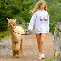 Alpaca Walk & Talk