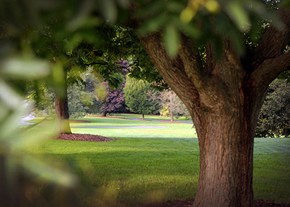 Verdant Views: Trees and the Changing Climate