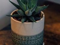 Pot Your Plant