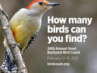 Join the 24th annual Great Backyard Bird Count