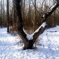 trail splits in two, so does tree