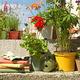 Photo of flower pots