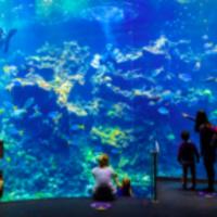 Virtual Talk on Museum Strategies for Digital Engagement