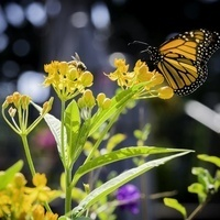 Photo of a butterfly on a flower.