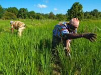 Two Black farmers bend down in a bright green field under a blue sky