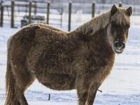 VIRTUAL: Cornell Equine Seminar Series - Fat Horses, EMS, Laminitis